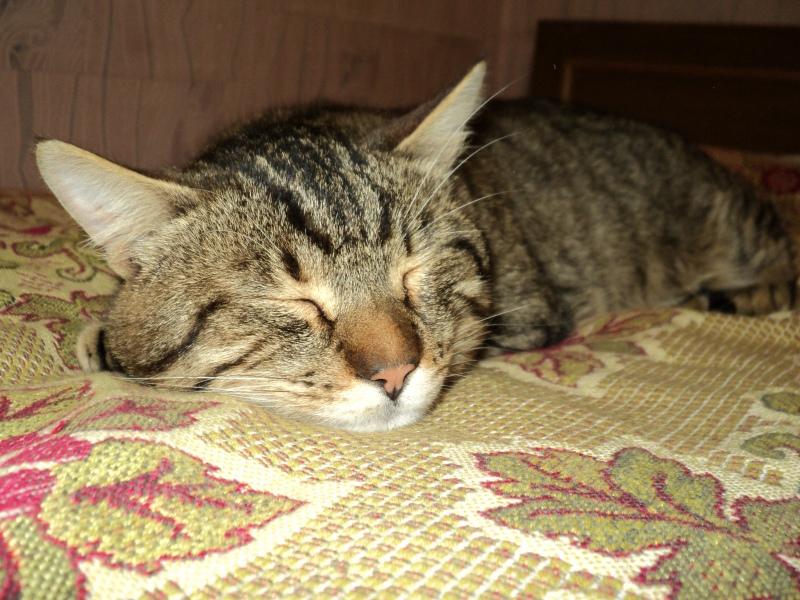 Фото котов в домашних условиях 44